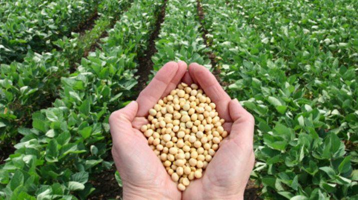 rusland-verbied-GMO - P2G
